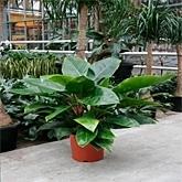 Grote Potplanten Voor Buiten.Planten