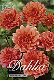 Dahlia Decorative Border Berliner Kleene per 1