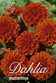 Dahlia Decorative Border Orange Nugget per 1