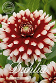 Dahlia Decorative Duet per 1